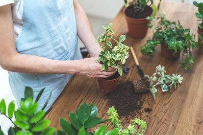 Cách lựa chọn cây để bàn làm việc phù hợp